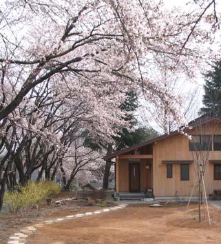 H200337 桜