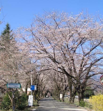 H190405桜