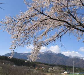 H200325 桜