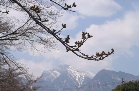 140_4085桜