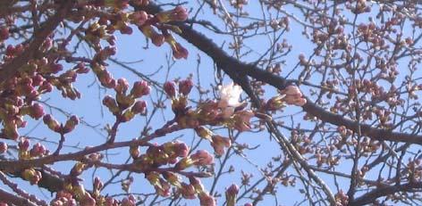 141_4119 開花