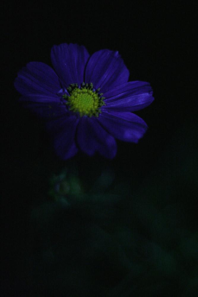 s2-IMG_1634B.jpg