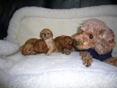 2子犬3週間