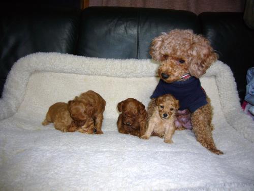 子犬3週間