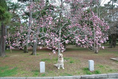 バセロン2009春4