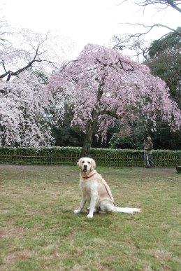 バセロン2009春5