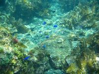 青い魚がいっぱい♪