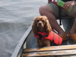 カヌー犬誕生!