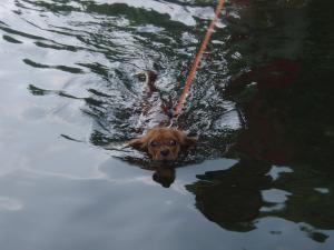 必死の泳ぎ