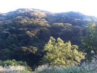 1107morikagayaku.jpg