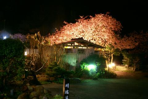 20090226yozakurakawabataroten.jpg
