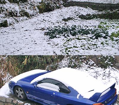今年はよく降る雪