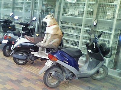平成の忠犬ハチ公
