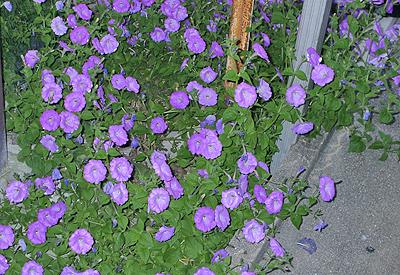 成り行き任せの花