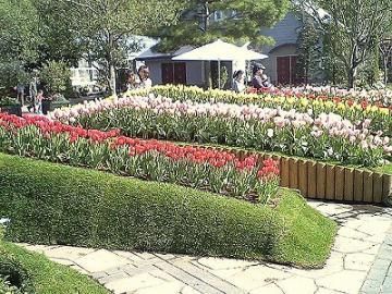 花のフローラル祭