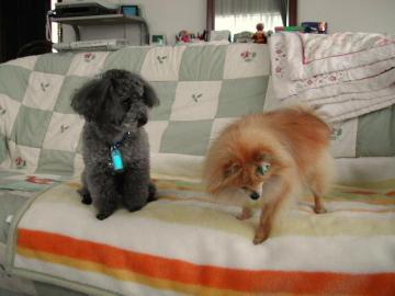 ロッキー&ジミー