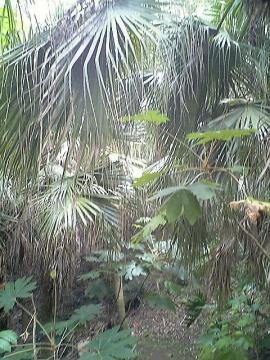 亜熱帯作物支場