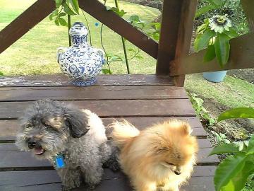 ジミー&ロッキー
