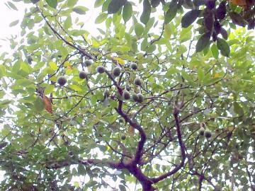 青島亜熱帯植物園