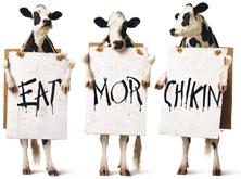3-cows.jpg
