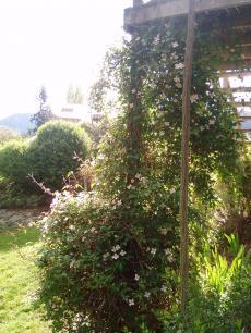 town+garden+027_convert_20081024110145[1]