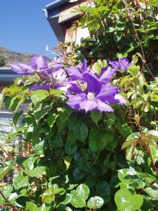 garden+004_convert_20081120144642[1]