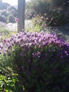 garden+001_convert_20081126110320[1]