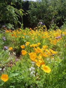 garden+030_convert_20081217140228[1]