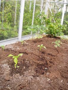 garden+003_convert_20090103160241[1]