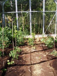 garden+007_convert_20090103160403[1]