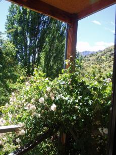 garden+003_convert_20090207125213[1]