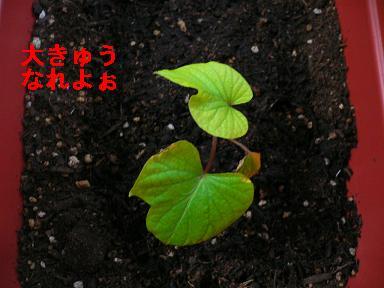 20060114114707.jpg