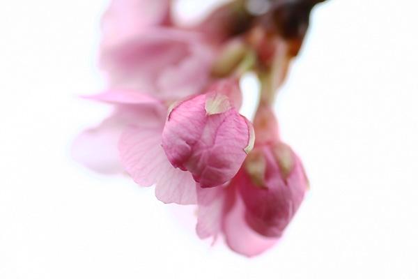 春の玉手箱