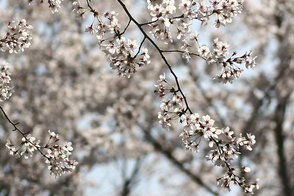 花キラキラ