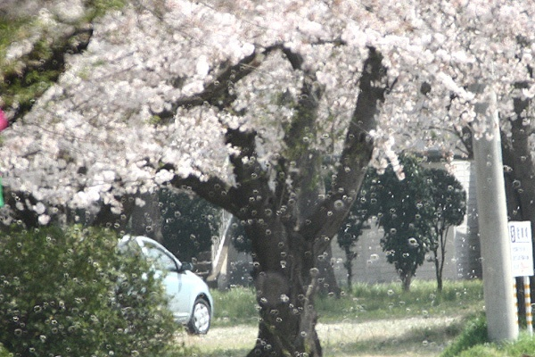 桜の泡怪獣