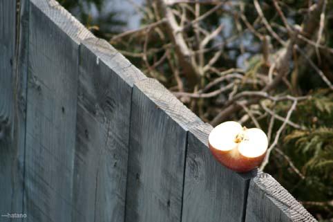 リンゴ/ふじ