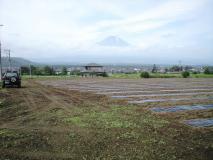 畑より富士山が見えていました。