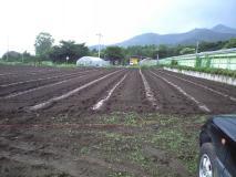 肥料を撒いた畑