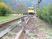 線路の上のロク