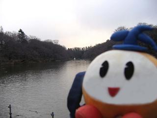 kittan ikenosakura  blog