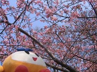 kittan sakurasakura  blog