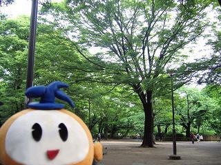 kittan sinryoku  blog