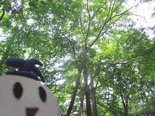 kittan midori  blog