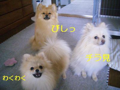 200906157021.jpg