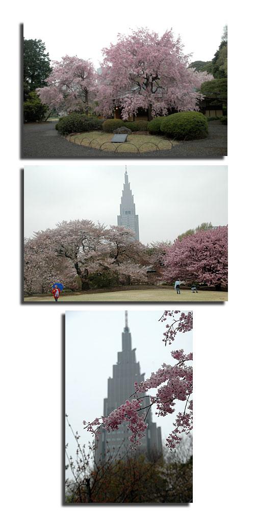4月10日新宿御苑1