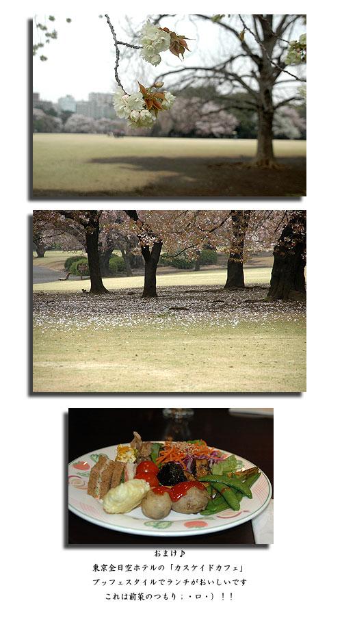 4月10日新宿御苑2