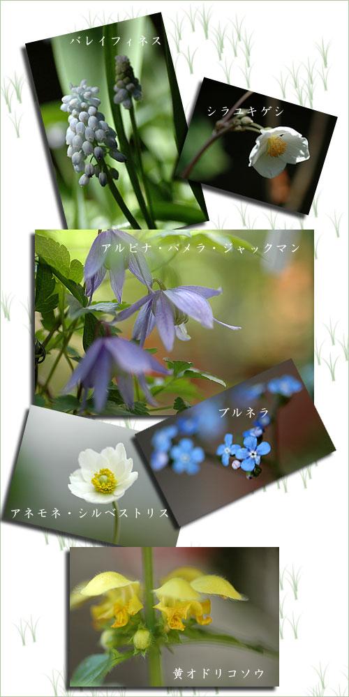 4月20日庭の花2