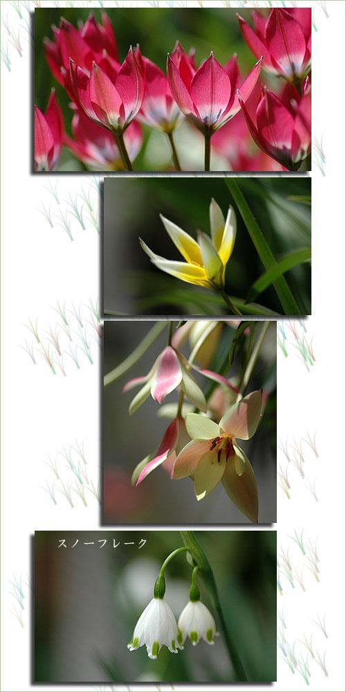 4月20日庭の花3