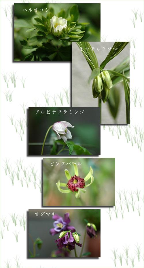 4月20日庭の花4