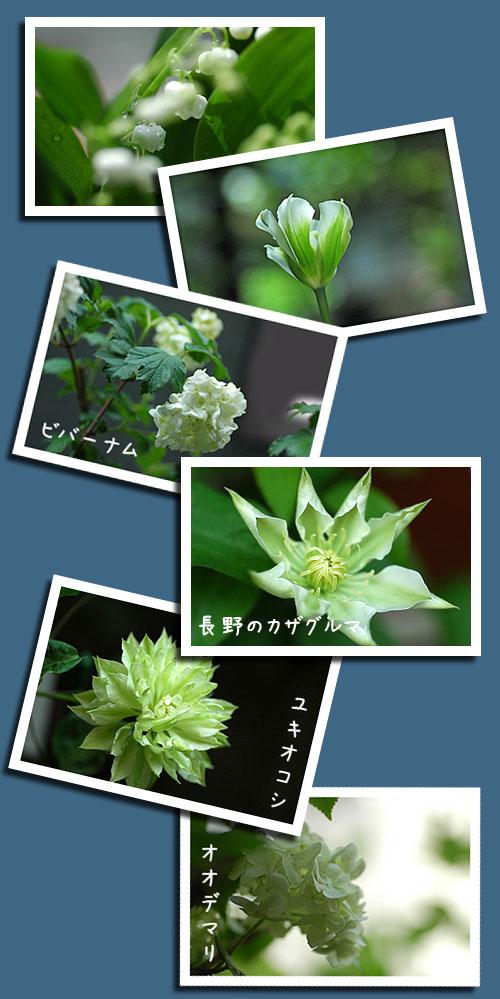 5月1日庭の花1